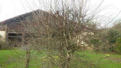 Árboles de Igartubeiti sin hojas