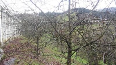 Manzanos de Igartubeiti