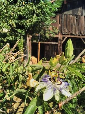 Agosto: la cosecha del nabo, la esperanza del baserritarra