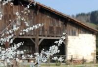 Marzo: a las puertas de la primavera