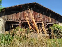 Recoger el trigo para alimentarse de pan de maíz