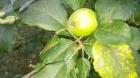 Fruituak